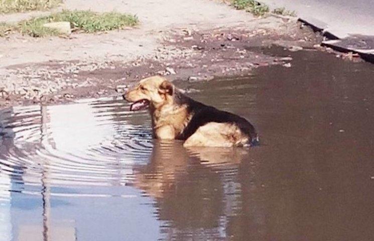 Як тварини у Черкасах від спеки рятуються