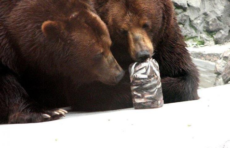 У Миколаївському зоопарку ведмедів освіжають рибним морозивом