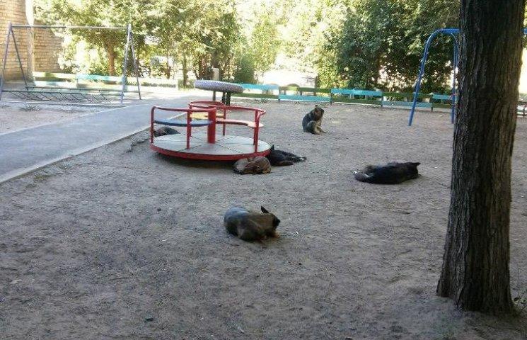 У Миколаєві пси окупували черговий дитячий майданчик