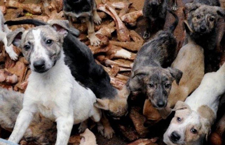 Суд узаконив проживання 40 собак в одній з вінницьких квартир