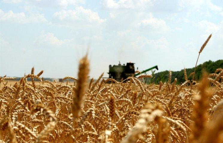 Миколаївські хлібороби намолотили вже 2 млн тонн зерна
