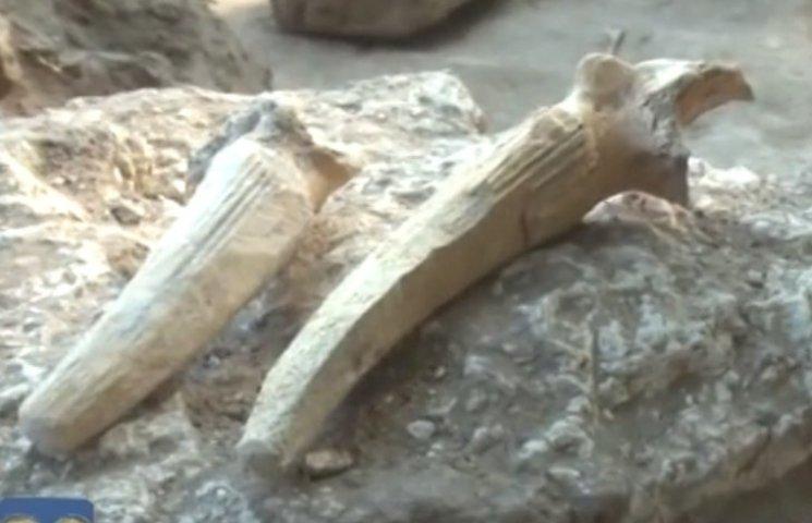 В Николаеве нашли жилье мастера 12 века до н.э.
