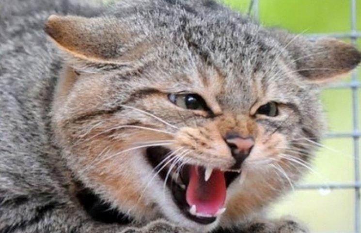 Під Вінницею домашній кіт сказився і покусав господаря