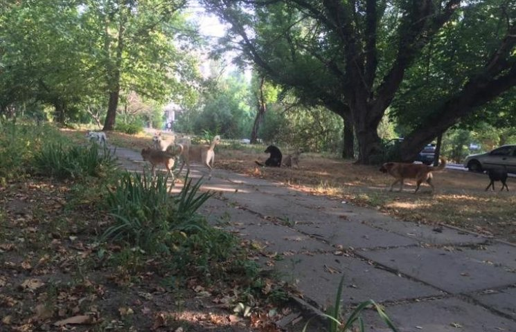 На території Миколаївської обласної лікарні поселилась зграя диких псів
