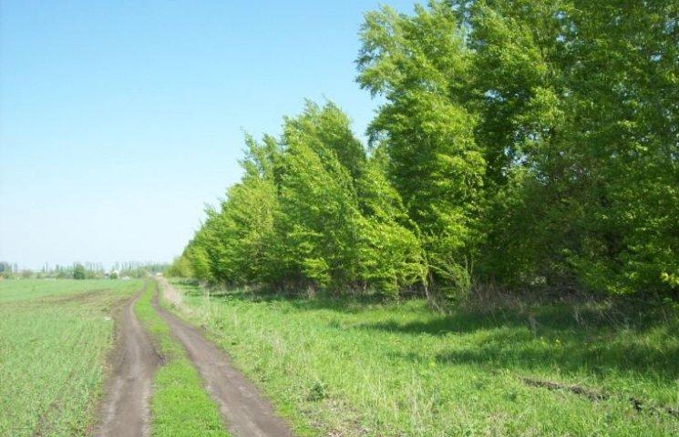 На Миколаївщині в лісопосадці знайшли обгоріле тіло молодої жінки