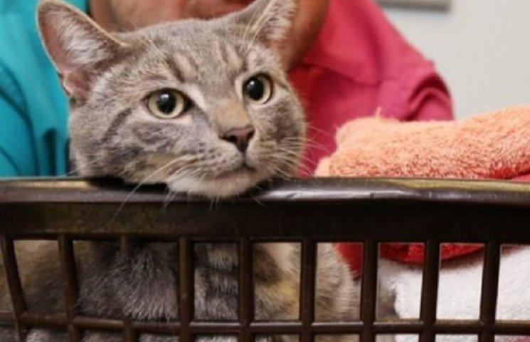 Кіт вижив після прання в гарячій воді у пральній машині