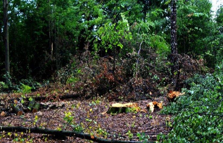 Військова прокуратура на Хмельниччині займається проблемою  незаконної вирубки лісу
