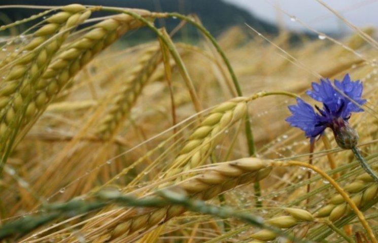 1 серпня - день цнотливої Макриди-Мокрин…