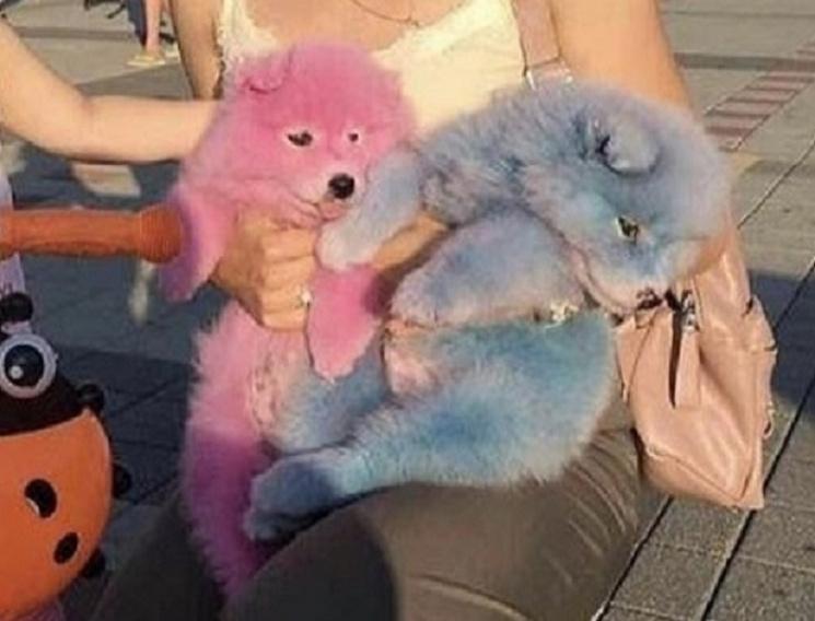 Поліцейський курорт: Чому окупований Крим нагадує рожевих собак