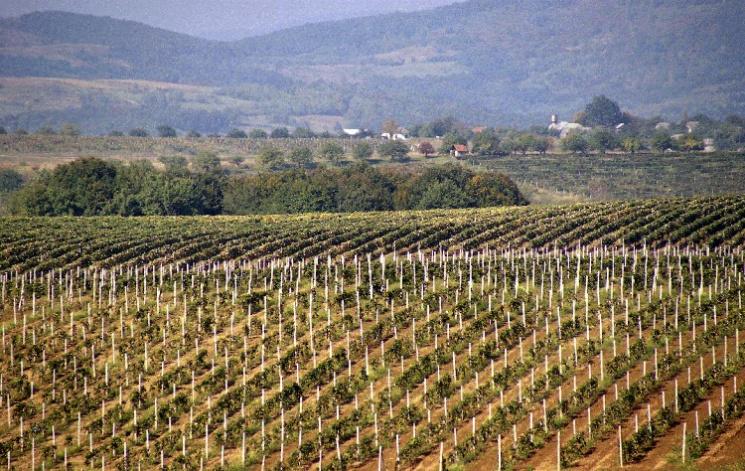 На Закарпатті найхолодніша за 15 років весна вдарила по врожаю