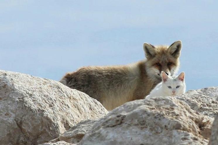 На Рівненщині скажені кіт і лисиця терор…