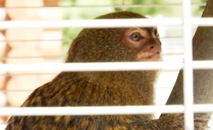 У вінницькому зоопарку найняли переклада…