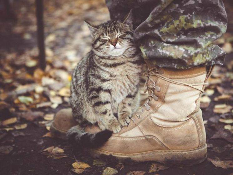 За що котам в АТО треба поставити пам'ятник-25