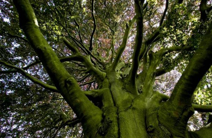 Для чого 15 липня обіймаються з деревами і згадують міфічних жінок