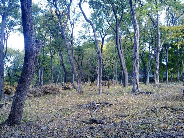 Останній буревій у Кам'янці звалив рекордну кількість дерев