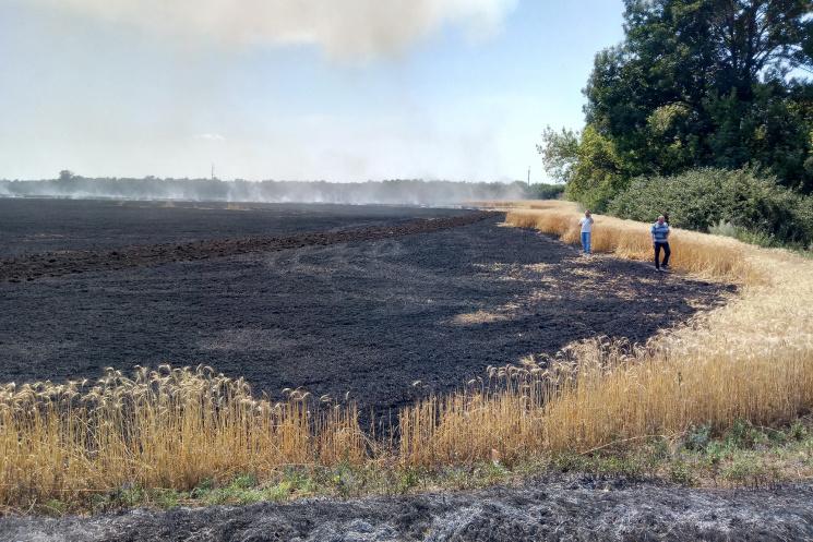 ВДонецкой области из-за военных действий выгорело 60 гапшеницы