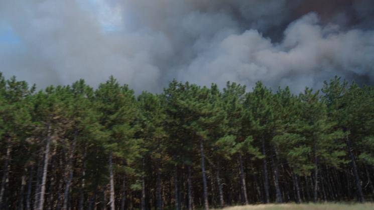 На Херсонщині знову масштабна лісова пожежа: приведено у готовність авіацію