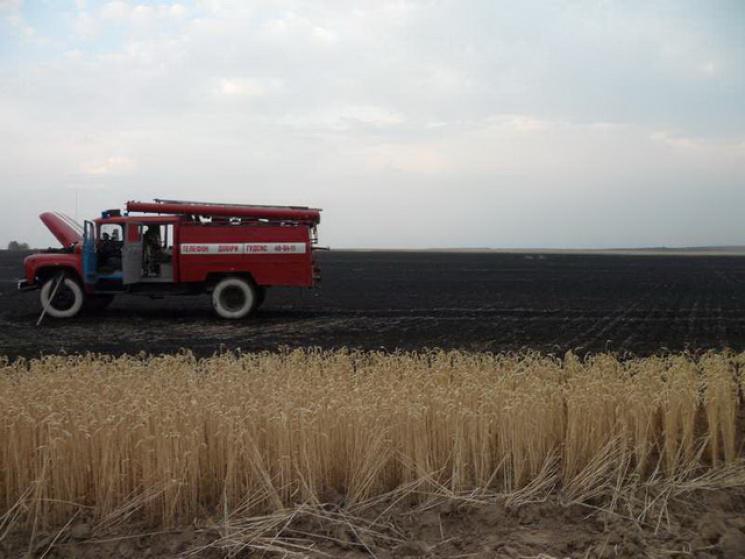 """Результат пошуку зображень за запитом """"горіло пшеничне поле"""""""