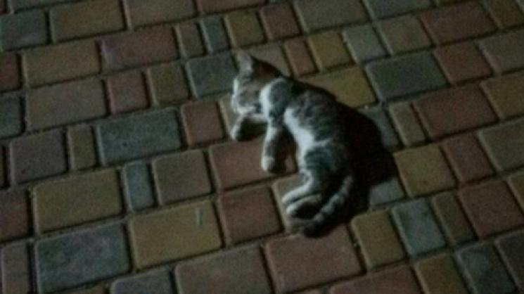 Патрульные задержали одессита, который выбросил котенка изокна 14-го этажа