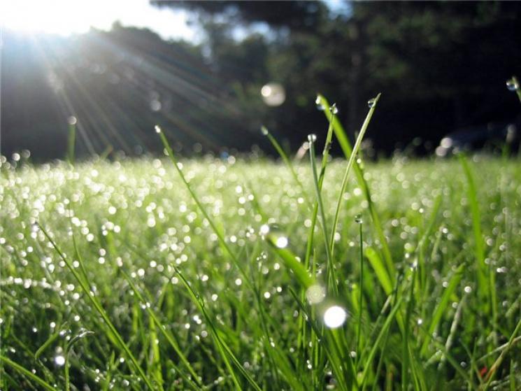 Погода в омской области на июнь месяц