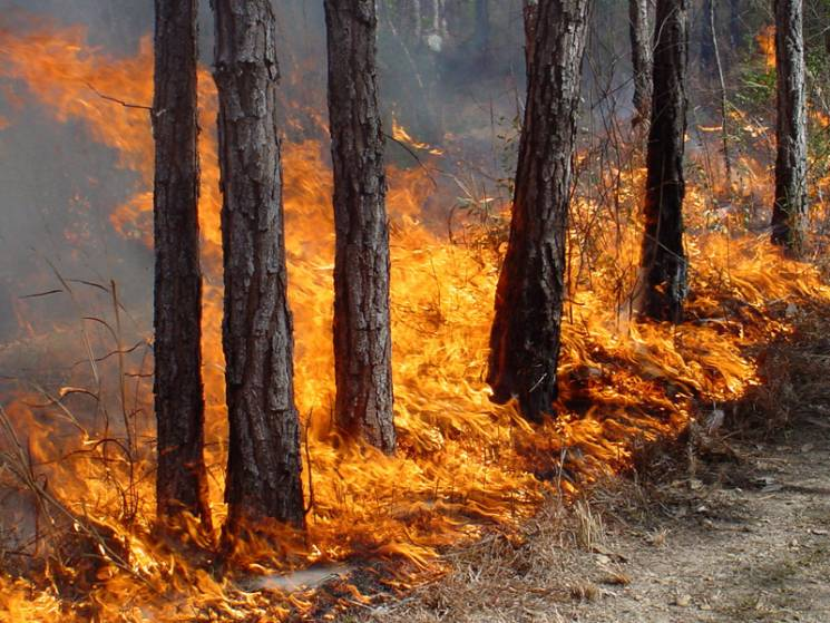 На Миколаївщині невідомі підпалили ліс