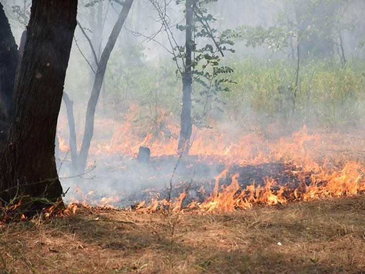 На Кінбурнському півострові відпочивальники гасили пожежу