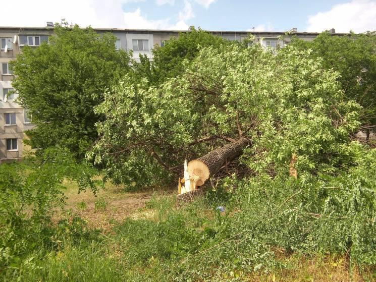 Кропивничани вийдуть на пікет перед мерією проти вирубки дерев