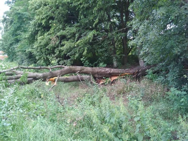 Повалені дерева тричі блокували рух на дорогах Вінниччини