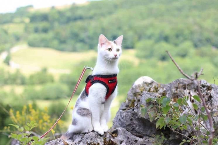 Пора відпусток: 30 котів-мандрівників, які відпочивають крутіше, ніж більшість людей (ФОТО)