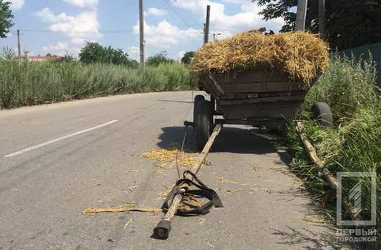 У Кривому Розі автівка врізалась у коня (ФОТО)