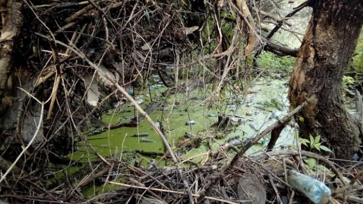 На закарпатській Латориці біля кордону зі Словаччиною утворився сміттєвий затор (ФОТО)