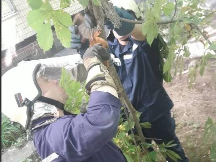 На ж/м Тополя рятувальники витягали білку з сітки (ФОТО)