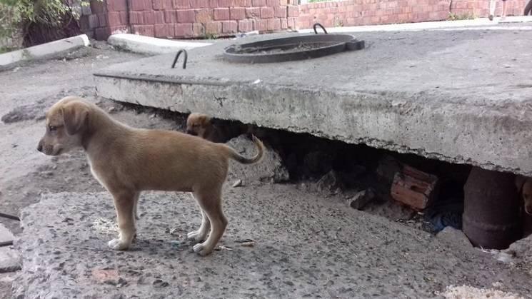 У Павлограді комунальники знайшли цуценят під бетонною плитою біля церкви (ФОТО)