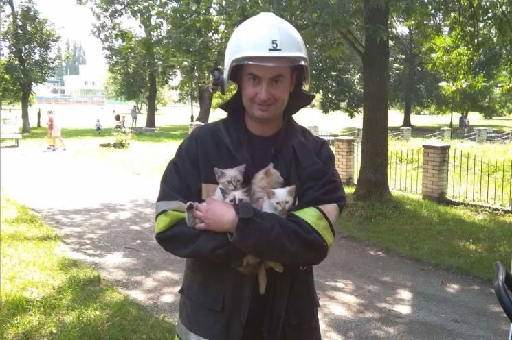 На Хмельниччині знов рятують котів (ФОТО)
