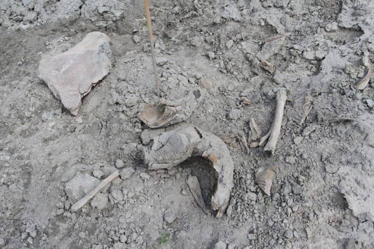 На Полтавщині знайшли артефакти льодовиковго періоду (ФОТО)