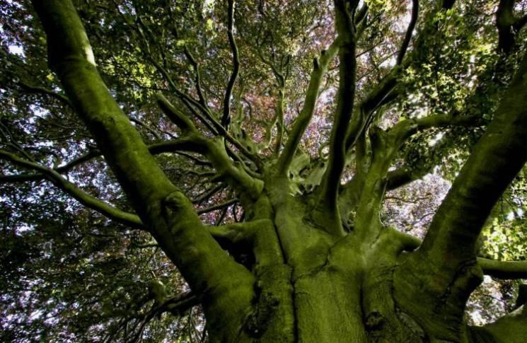 Чому 15 липня обіймаються з деревами, не працюють і згадують міфічних жінок