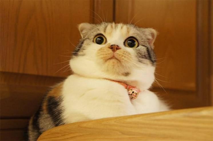 Станіславський би повірив: Якими драматично переконливими бувають коти (ФОТО)