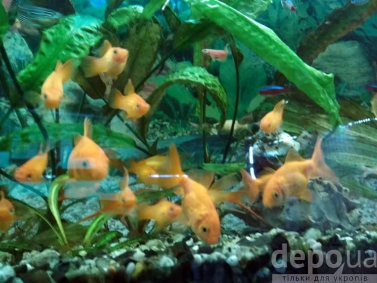 Экзотика серой зоны: Как в прифронтовых городах разводят золотых рыбок и ухаживают за пальмами