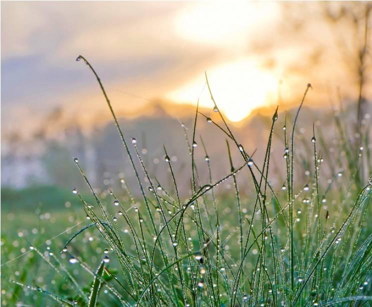 Чому 19 липня зранку варто походити по траві босоніж, а роботу закінчити якнайшвидше