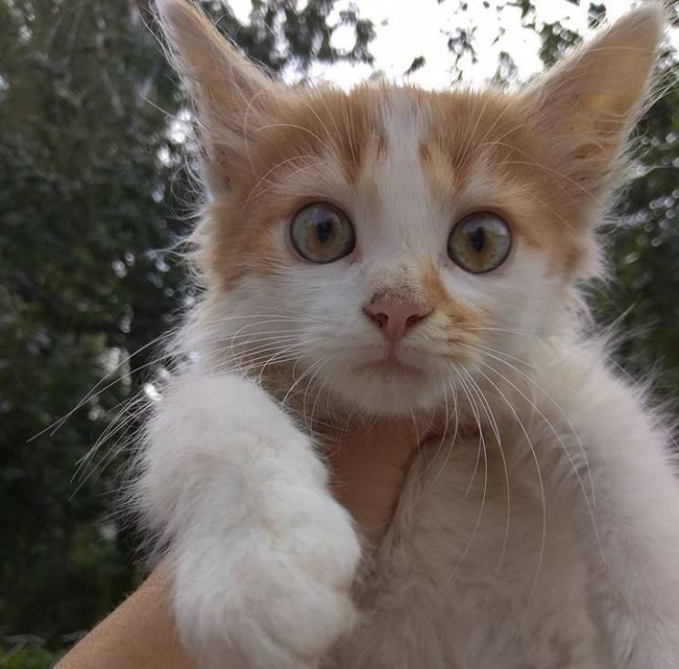Ще одне звірство у Вінниці: Кошеня підвішали на його ж кишках (ФОТО 18+)