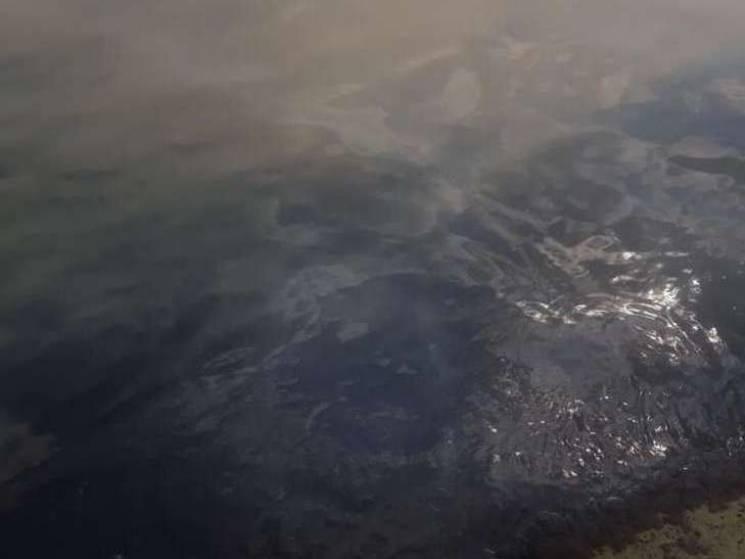 Біля одеського дельфінарію помітили, як у море зливають нечистоти (ВІДЕО)