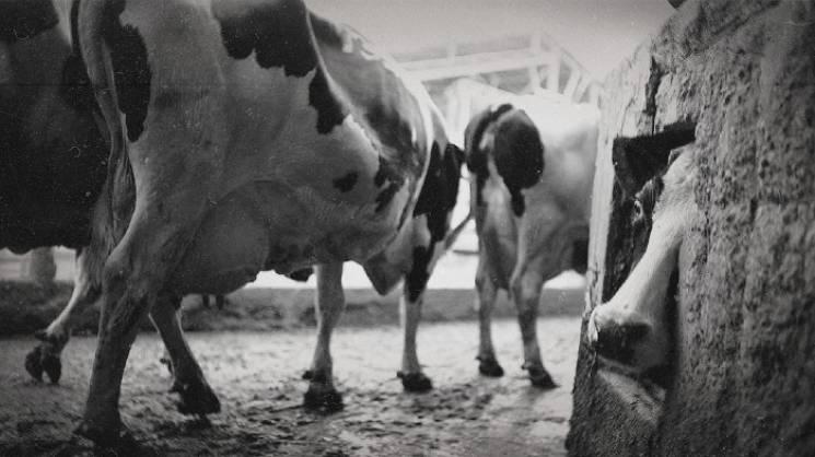 Архіви КДБ: Як на Запоріжжі ветеринарів…