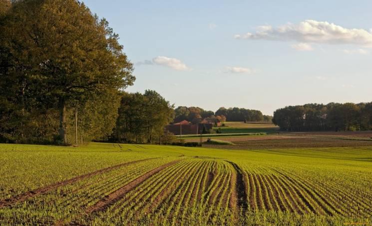 На Миколаївщині АТОвцям виділили 6,6 тис. га землі під городи