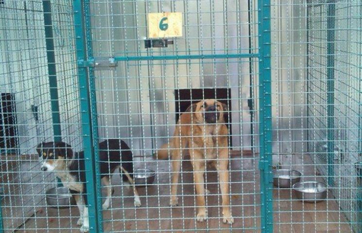 У Дніпропетровську перетримують безпритульних тварин за нормами Міноборони (ФОТО)