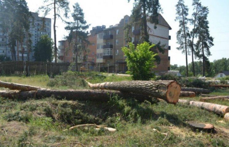 На Сумщині валять сосновий ліс під забудову (ФОТОФАКТ)