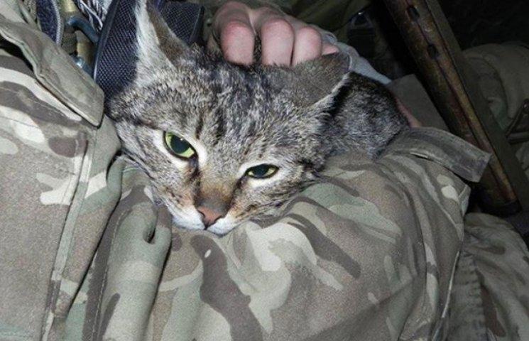 """У батальйоні """"Донбас"""" під Широкиним поповнення - кішка-патріотка привела на позиції кошенят (ФОТО)"""