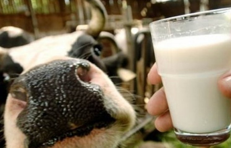 Латвійці готові допомогти вінничанам вийти на європейський ринок молока
