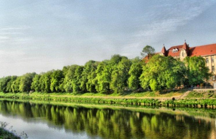 В Ужгороді піку цвітіння досягла найдовша в Європі липова алея (ФОТО)