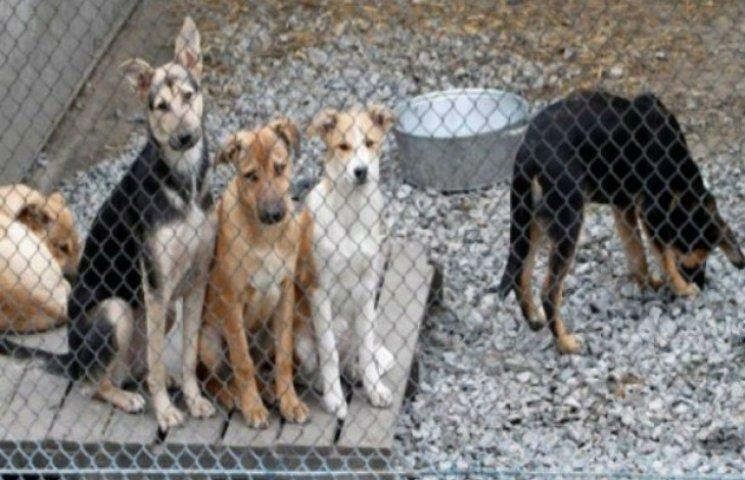 Сумських собак загонять під один дах