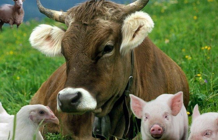 Влада Вінниччини обіцяє підтримати сімейні ферми
